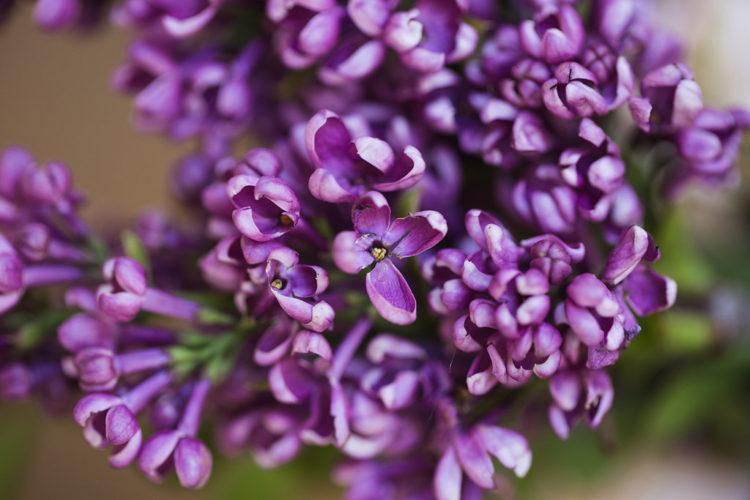 Cileo's Garden Open House - Behind the Scenes - flowers