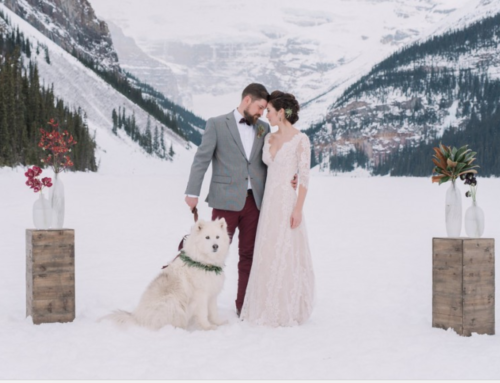 How to Involve your Pets in your Wedding