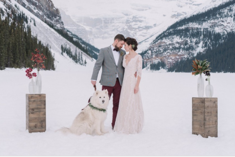 dog out in the snow at a winter wedding - Amanda Douglas Events